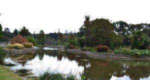 Ornamental Lake at Royal Botanic Gardens