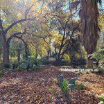 Bendigo Botanic Gardens 6
